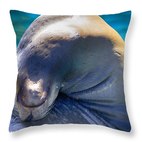 Sea Lion Throw Pillow featuring the photograph Contortionist by Douglas Barnard