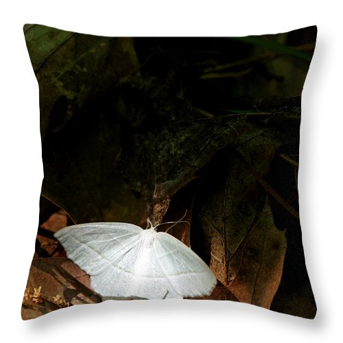 Moth Throw Pillow featuring the photograph Contrast by Allan Lovell