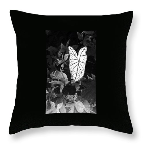Caladium Throw Pillow featuring the photograph Contrast by Vonda Lawson-Rosa