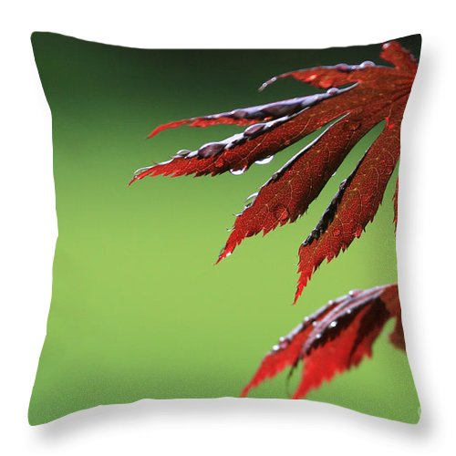 Leaf Throw Pillow featuring the photograph Contrast by Winston Rockwell