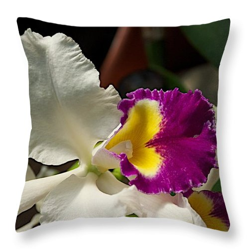 Flowers Throw Pillow featuring the photograph Contrasts by Joseph Yarbrough
