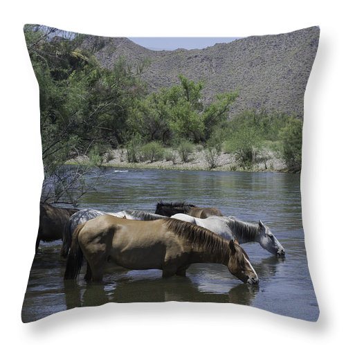 Horses Throw Pillow featuring the photograph Cooling Off by Lorraine Harrington