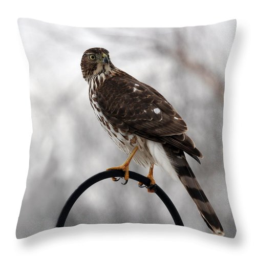 Coopers Hawk Throw Pillow featuring the photograph Coopers Hawk by Jackson Pearson