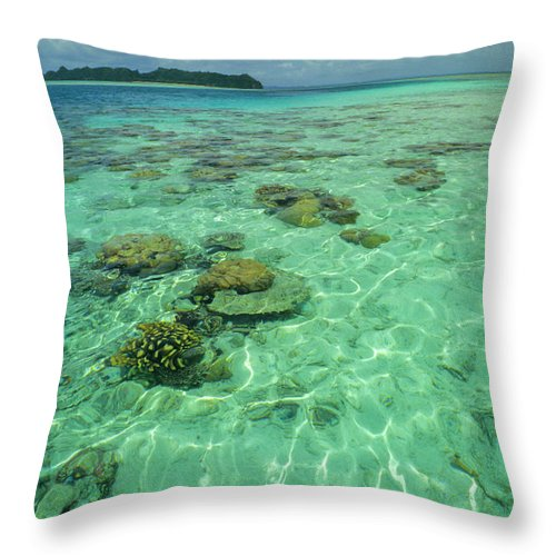 Water's Edge Throw Pillow featuring the photograph Coral Paradise by Tammy616