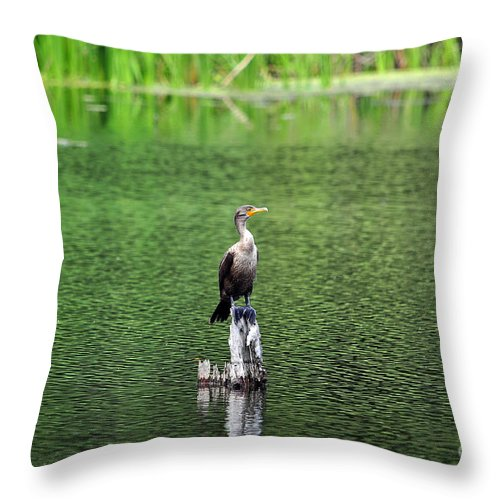 Cormorant Throw Pillow featuring the photograph Cormorant Chilling by Al Powell Photography USA