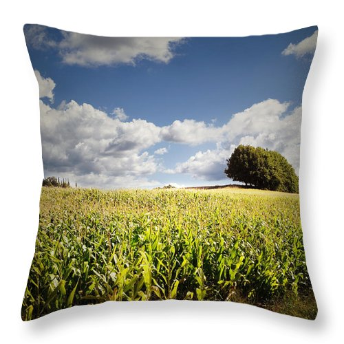 Farm Throw Pillow featuring the photograph Corn Field by Les Cunliffe