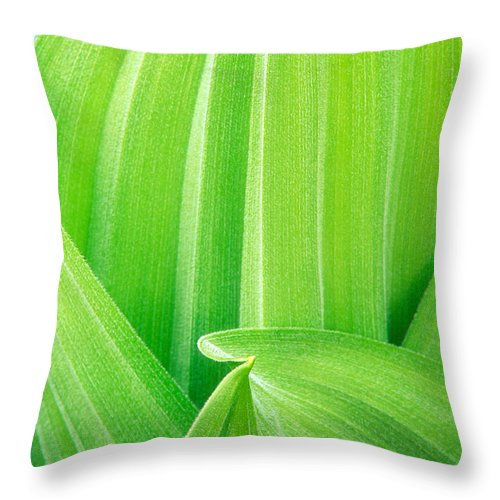North America Throw Pillow featuring the photograph Corn Lily Leaf Detail Yosemite Np California by Dave Welling