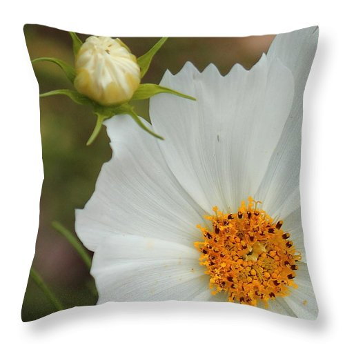 Cosmos Throw Pillow featuring the photograph Cosmos Bud by Karen Beasley