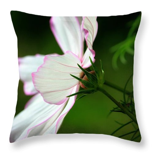 Cosmos Throw Pillow featuring the photograph Cosmos Profile by Sharon Johnston