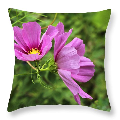 Cosmos Throw Pillow featuring the photograph Cosmos Tickles Me Pink - Cosmos Caudatus by Mother Nature