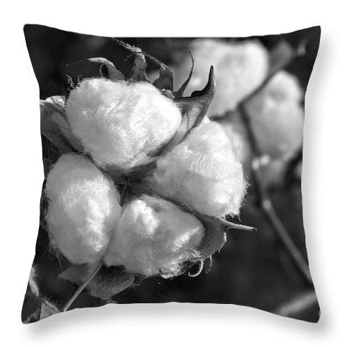 Cotton Throw Pillow featuring the photograph Cotton by Debra Johnson