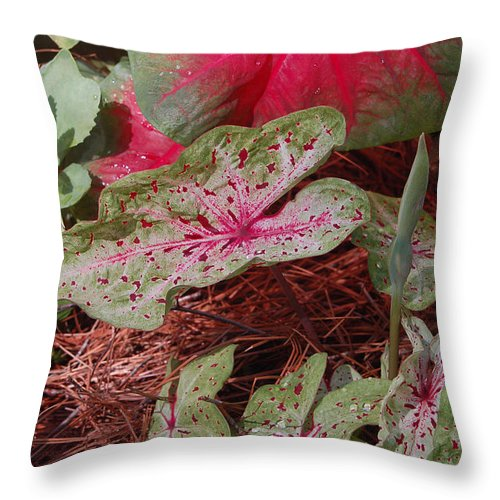 Caladium Throw Pillow featuring the photograph Courtyard Caladium by Suzanne Gaff