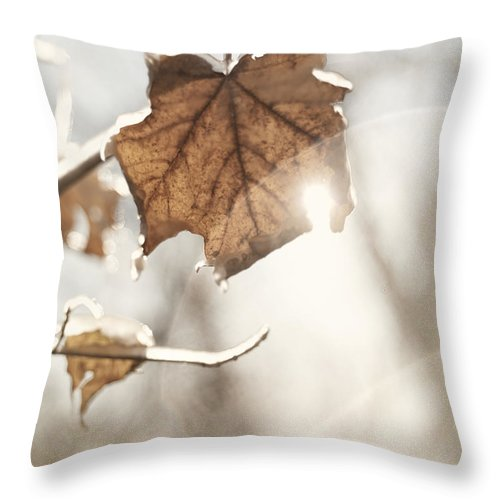 Nature Throw Pillow featuring the photograph Covered With Ice Maple Leafe On A Sunny Day by Oleksiy Maksymenko