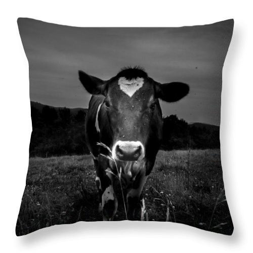 Cows Throw Pillow featuring the photograph Cow by Bob Orsillo