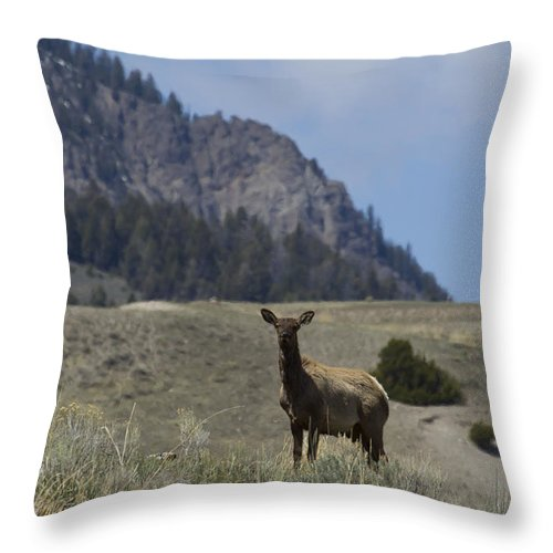 Elk Throw Pillow featuring the photograph Cow Elk  #9488 by J L Woody Wooden