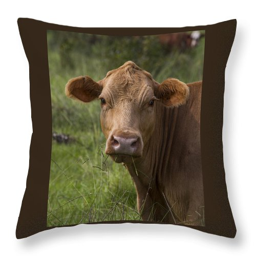 Cow Throw Pillow featuring the photograph Cow Portrait I by TN Fairey