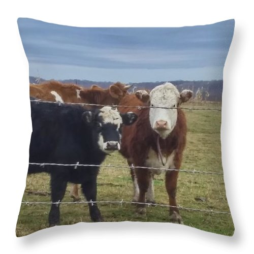 Cows Throw Pillow featuring the photograph Cow Time by Bridgett Brumbaugh