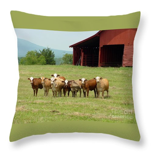 Cow Throw Pillow featuring the photograph Cows8918 by Gary Gingrich Galleries