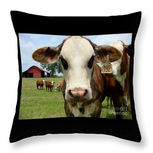 Cow Throw Pillow featuring the photograph Cows8957 by Gary Gingrich Galleries