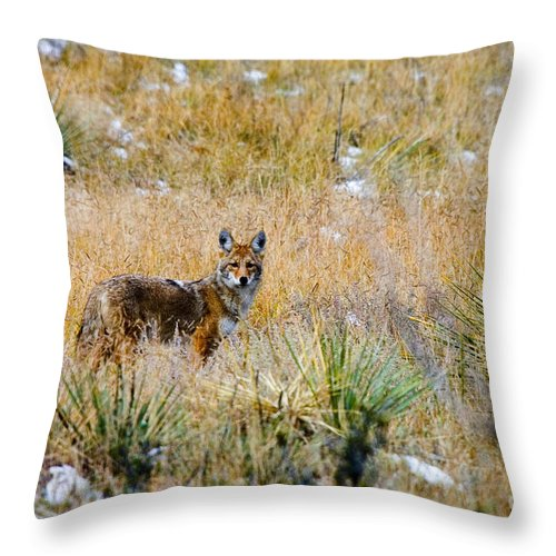 Animal Throw Pillow featuring the photograph Coyotes by Steve Krull