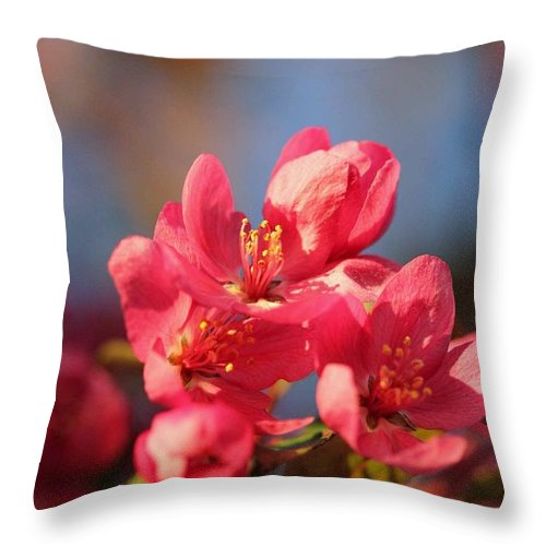Tree Throw Pillow featuring the photograph Crab Apple by Stephanie Hanson