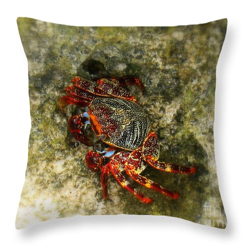 Crab In Cozumel Throw Pillow featuring the photograph Crab In Cozumel by Patti Whitten