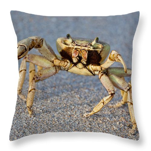 Crabby Throw Pillow featuring the photograph Crabby by Michelle Constantine