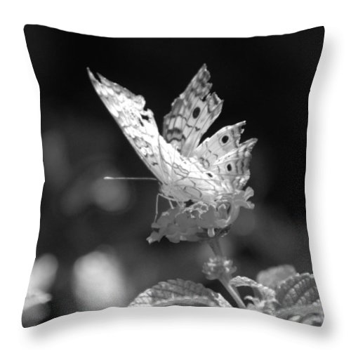 Lepidopterology Throw Pillow featuring the photograph Cracked Wing by Rob Hans