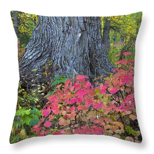 Trail Throw Pillow featuring the photograph Cranberry Bush And Cottonwood Tree by Carl R. Battreall