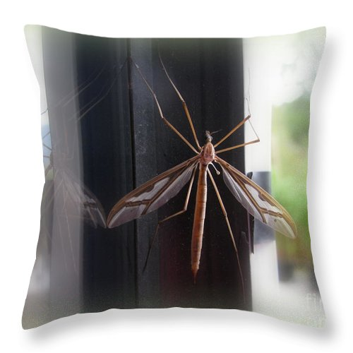 Bug Throw Pillow featuring the photograph Crane Fly by Leone Lund
