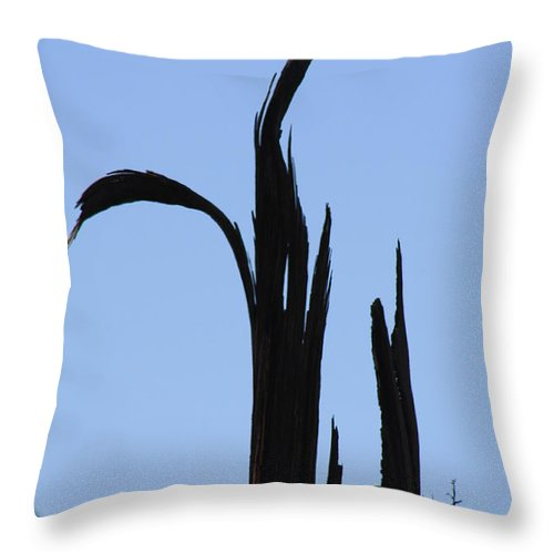 Crane Throw Pillow featuring the photograph Crane Wood by Brandi Maher