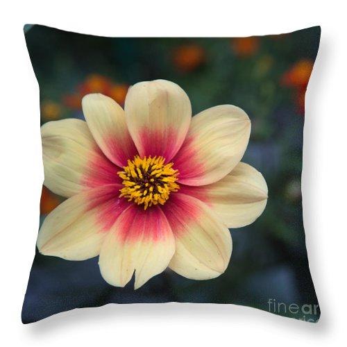 Cream Colored Dahlia Throw Pillow featuring the photograph Creamy Dahlia by Anita Miller