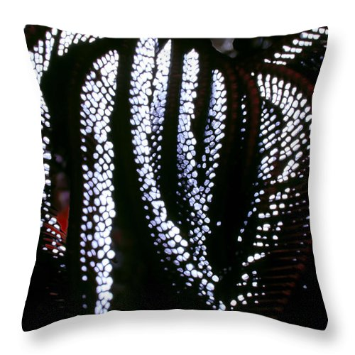 Micronesia Throw Pillow featuring the photograph Crinoids 4 by Dawn Eshelman