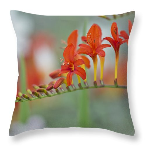 Crocosima Throw Pillow featuring the photograph Crocosima by Maj Seda