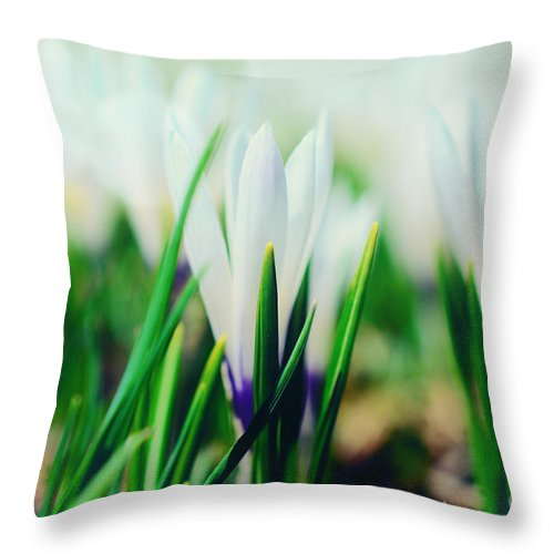 Krokus Throw Pillow featuring the photograph Crocus Blue by Sabine Jacobs