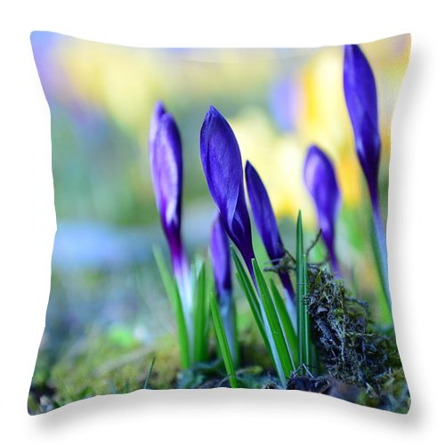 Bokeh Throw Pillow featuring the photograph Crocus by Hannes Cmarits