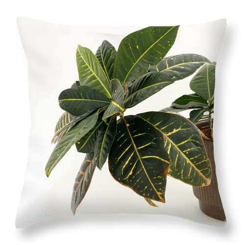 Croton Throw Pillow featuring the photograph Croton Houseplant by Lee Serenethos