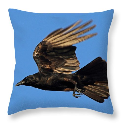 Crow Throw Pillow featuring the photograph Crow In Flight by Meg Rousher