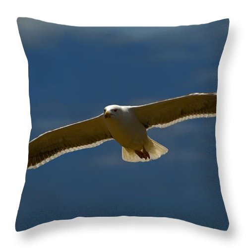 Gull Throw Pillow featuring the photograph Cruising by Murray Bloom