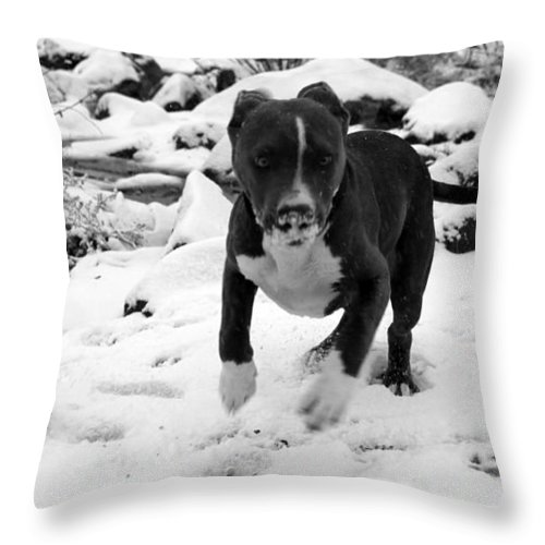 Pit Bull Throw Pillow featuring the photograph Crush Snow Run by Eric Martin