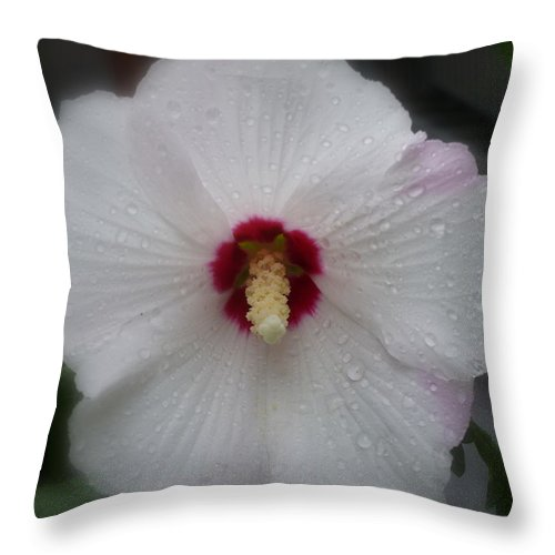 Flower Macro Throw Pillow featuring the photograph Crying Sharon by Lingfai Leung