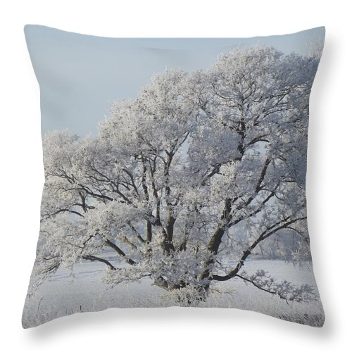 Frost Throw Pillow featuring the photograph Crystal Oak by Bonfire Photography