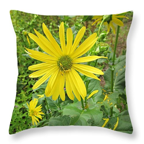 Cup Plants Throw Pillow featuring the photograph Cup Plant Blooms by MTBobbins Photography