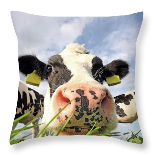 Grass Throw Pillow featuring the photograph Curious Cow by Marcel Ter Bekke
