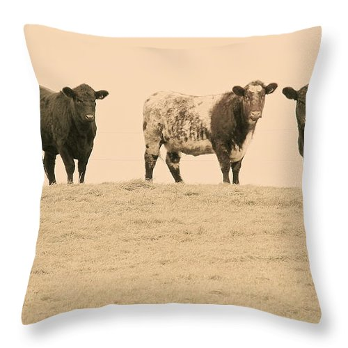 Cows Throw Pillow featuring the photograph Curious Cows by Suzanne Oesterling