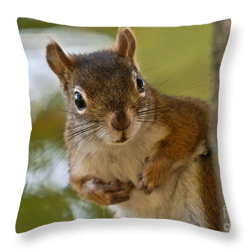 Throw Pillow featuring the photograph Curious Squirrel by Cheryl Baxter