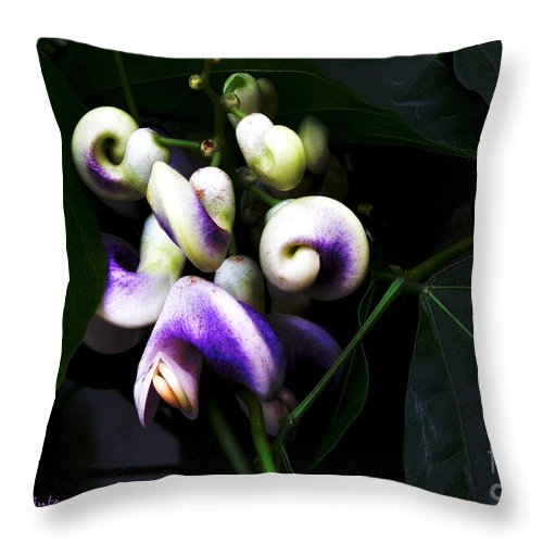 Snail Vine Throw Pillow featuring the photograph Curlicues by RC DeWinter