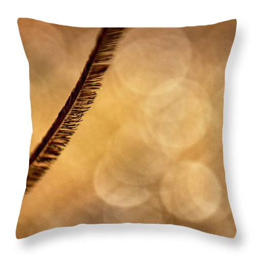 Feather Throw Pillow featuring the photograph Curve by Lauri Novak