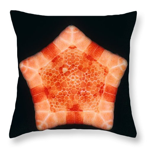 Cushion Star Throw Pillow featuring the photograph Cushion Star by D.P. Wilson/FLPA