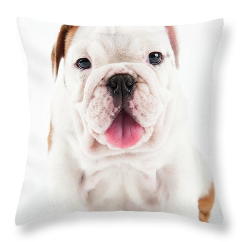 Pets Throw Pillow featuring the photograph Cute Bulldog Puppy On White Background by Peter M. Fisher